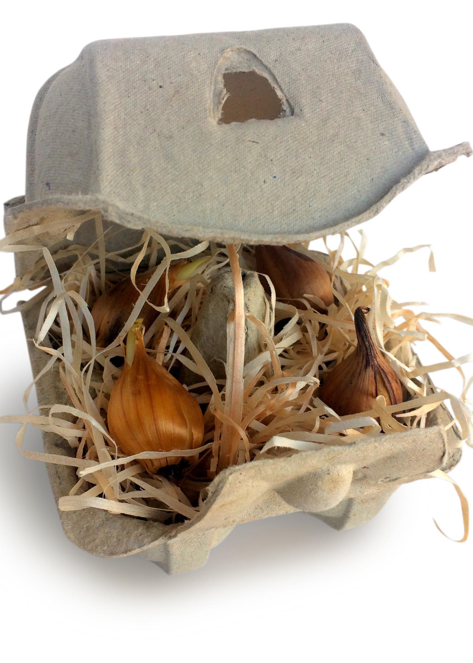 Bloembollen Hollandse Iris  Vrolijk Pasen