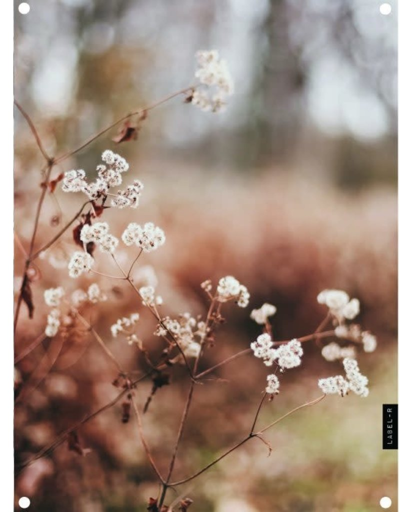 Tuinposter Dryflower