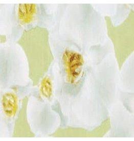 Plakfolie orchidee 45x200