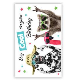 PRIMEURCARDS Stay cool om your Birthday- PrimeurCards- met envelop