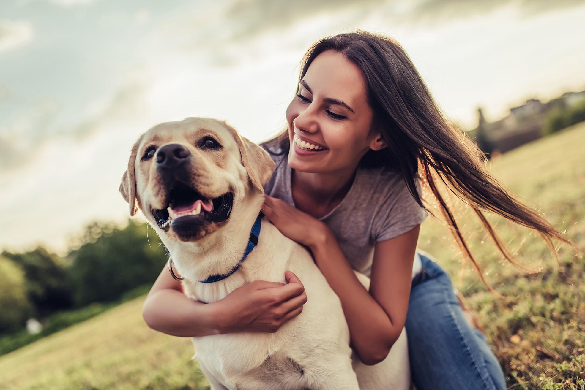 de voordelen van cbd olie voor honden