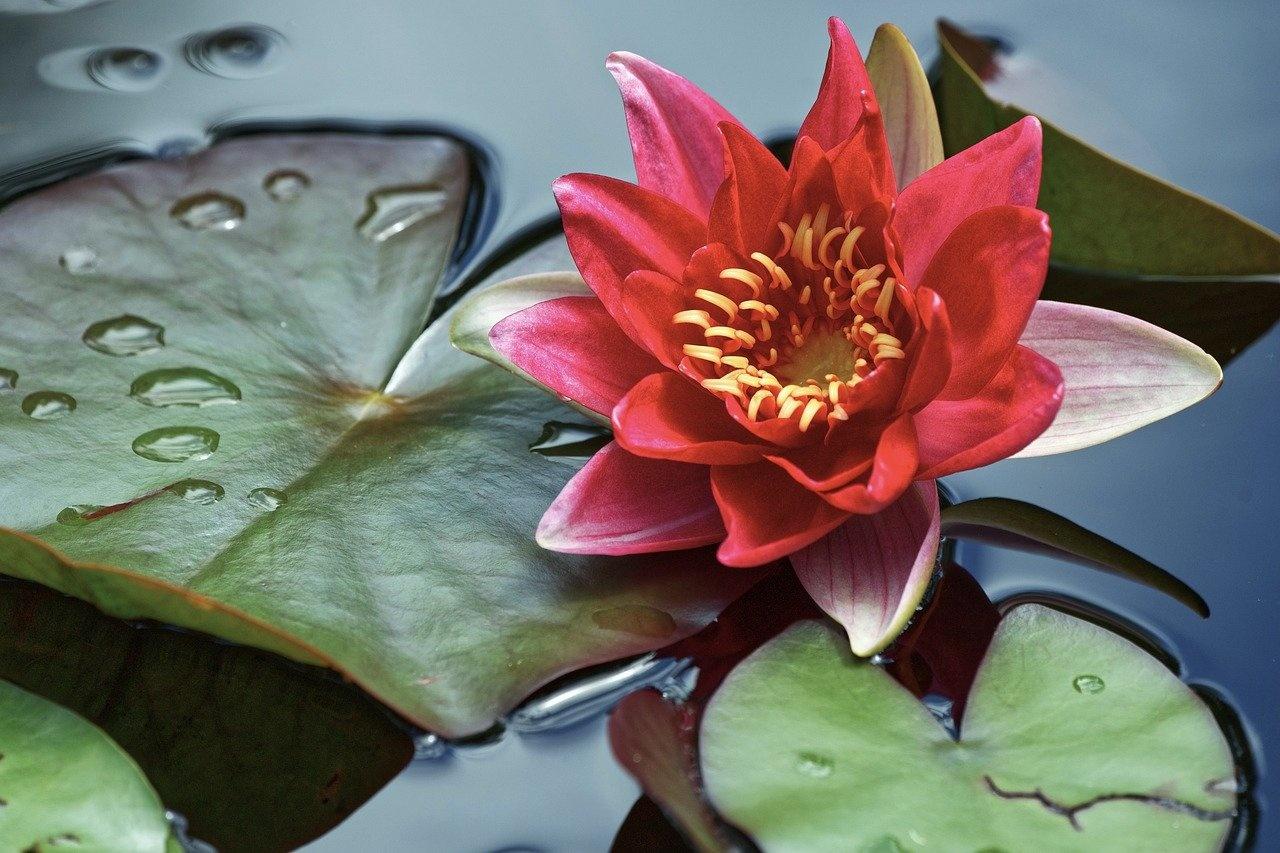 Tagesimpuls Mantra  Sonntag, 18.07.2021 Energie Wasser Yin/Yang Ausgleich/Lichtsäule