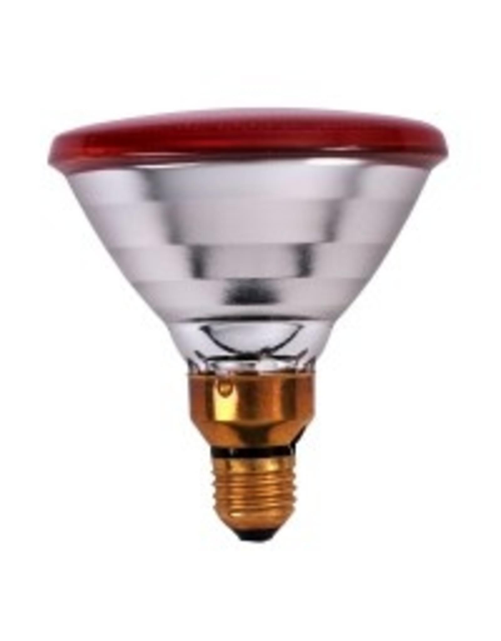Broed accessoires Verw Lamp PAR 100w - 1 Stuks