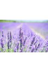 Chi Lavendel Frankrijk olie 10 ml