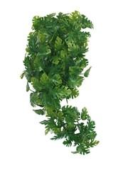 Komodo Komodo plant split philodendron