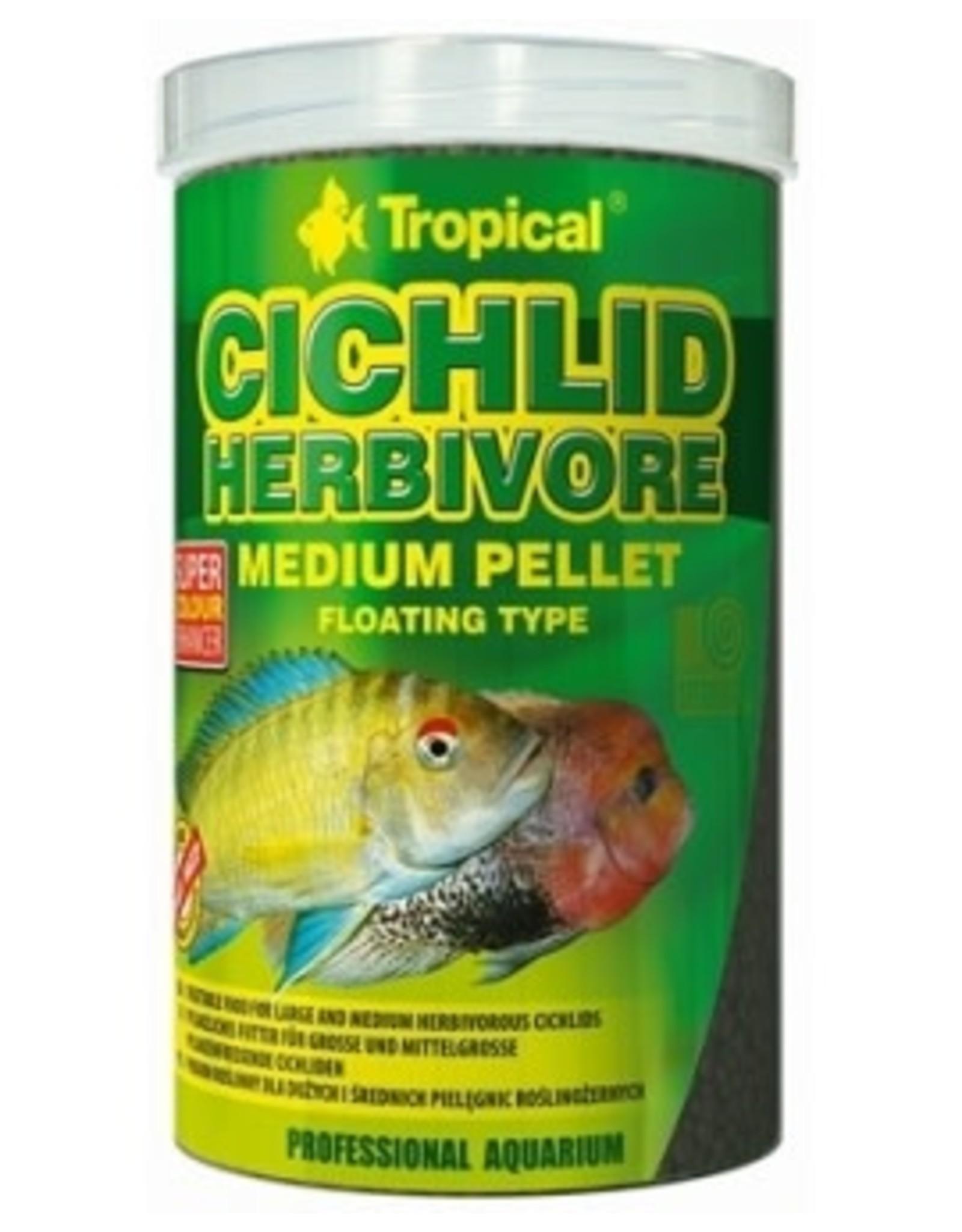 Tropical CICHLID HERBIVORE
