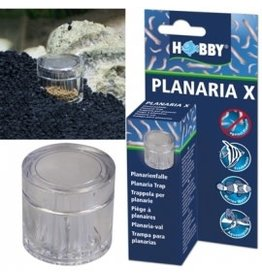 Hobby PLANARIA X piege a planaires HOBBY