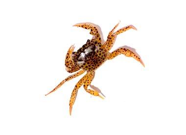 Bubba's Crabs