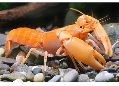 Bubba's Crayfish
