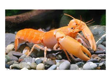 Bubba's Crayfish