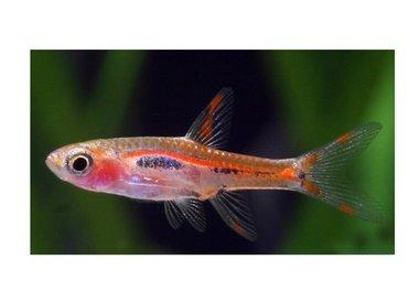 Bubba's Fishs