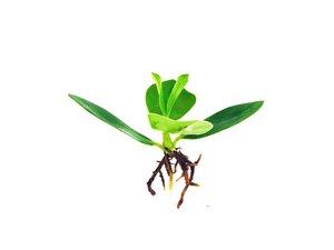 Bubba's Plants