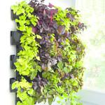 AquaEl Green wall - VERSA GARDEN
