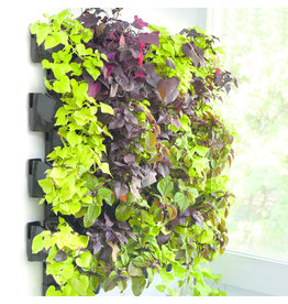 AquaEl Green wall - VERSA GARDEN (12 pots only)