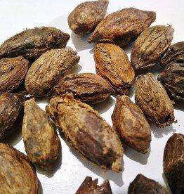 Produits naturels Catappa zaden