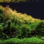 Plants & Aquascaping