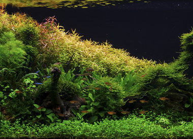 Plants & Aquascaping