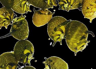 Slakken