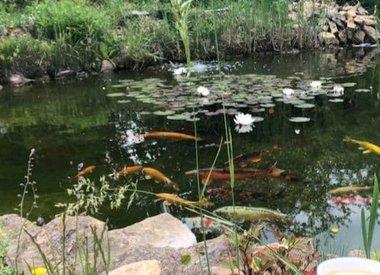 Poubellarium & Bassins