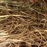 "Produits naturels ""Palm Grass"" straw"