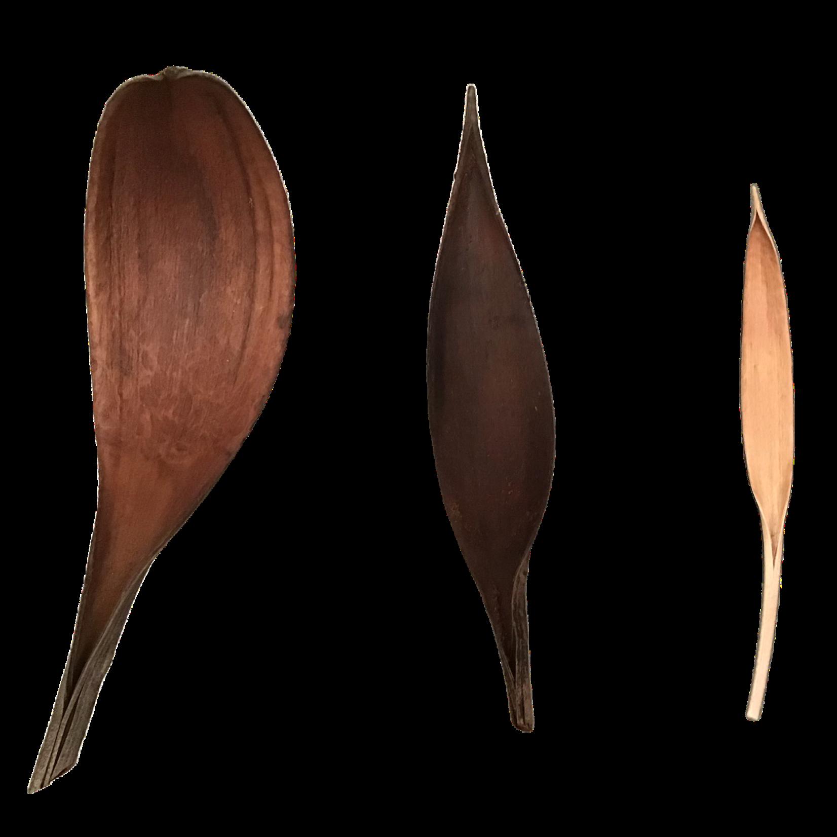 Produits naturels Feuilles de coco sechees