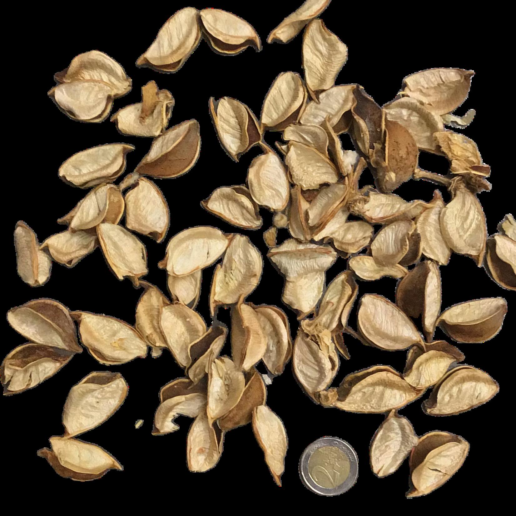Produits naturels Fleurs de coton