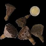 Produits naturels Coeurs de lotus Mini 5 pièces