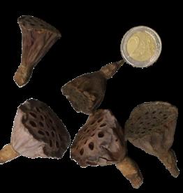Produits naturels Coeurs de lotus Mini