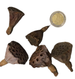 Produits naturels Coeurs de lotus S (4pcs)