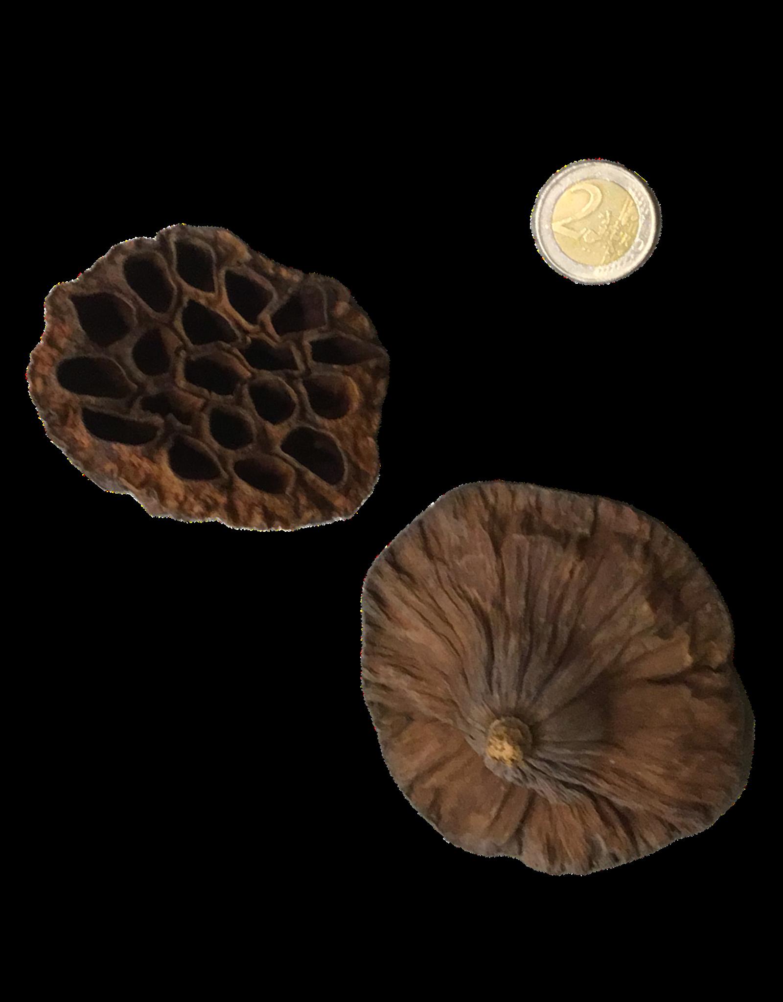 Produits naturels Lotus Hearts (1 piece)