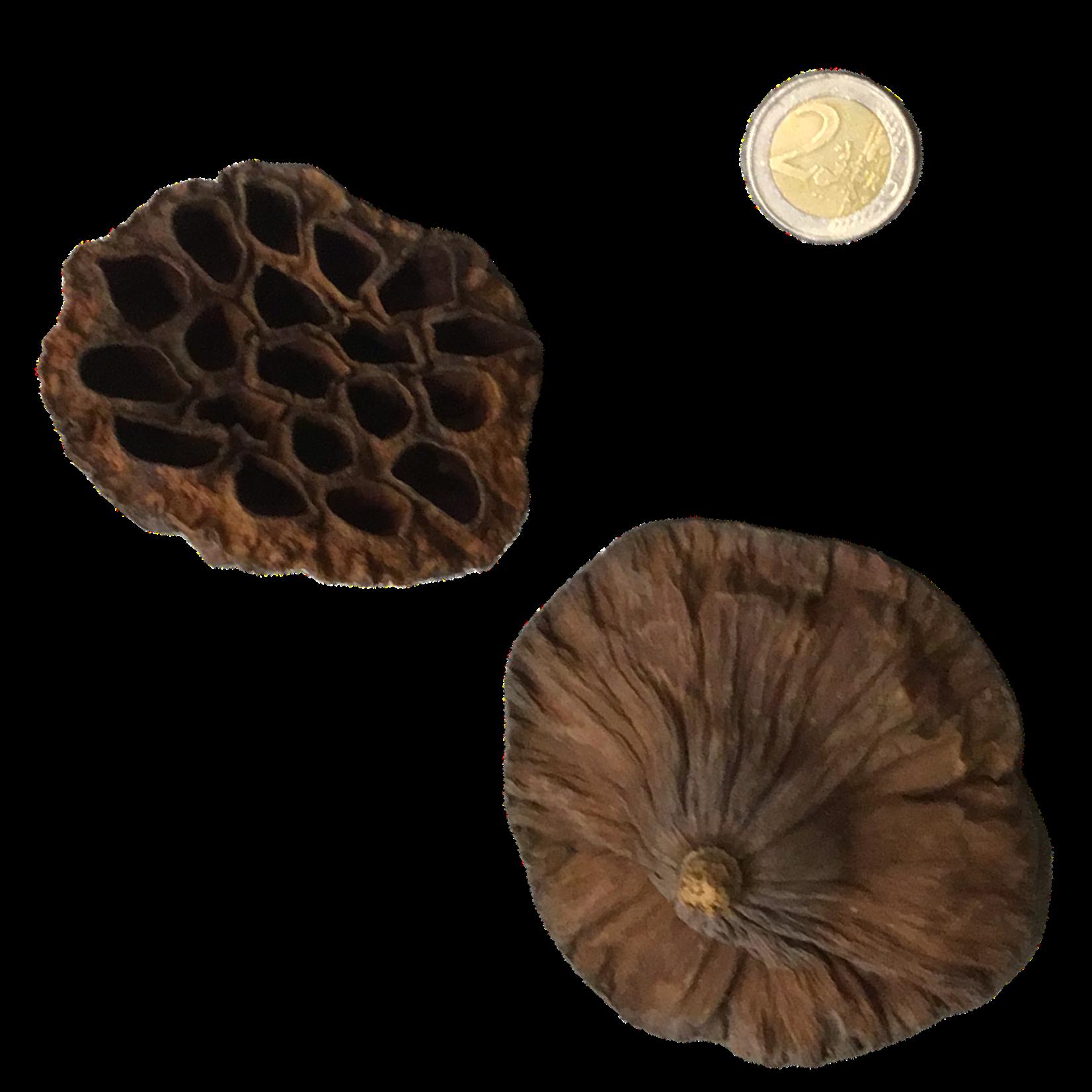 Produits naturels Lotus Harten (1 stuk)