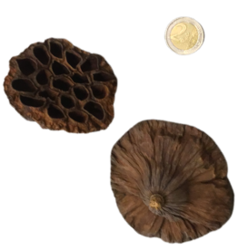 Produits naturels Coeurs de Lotus