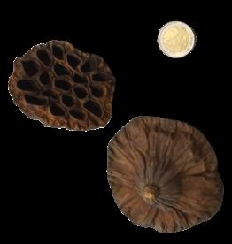 Produits naturels Coeurs de Lotus L (2pcs)