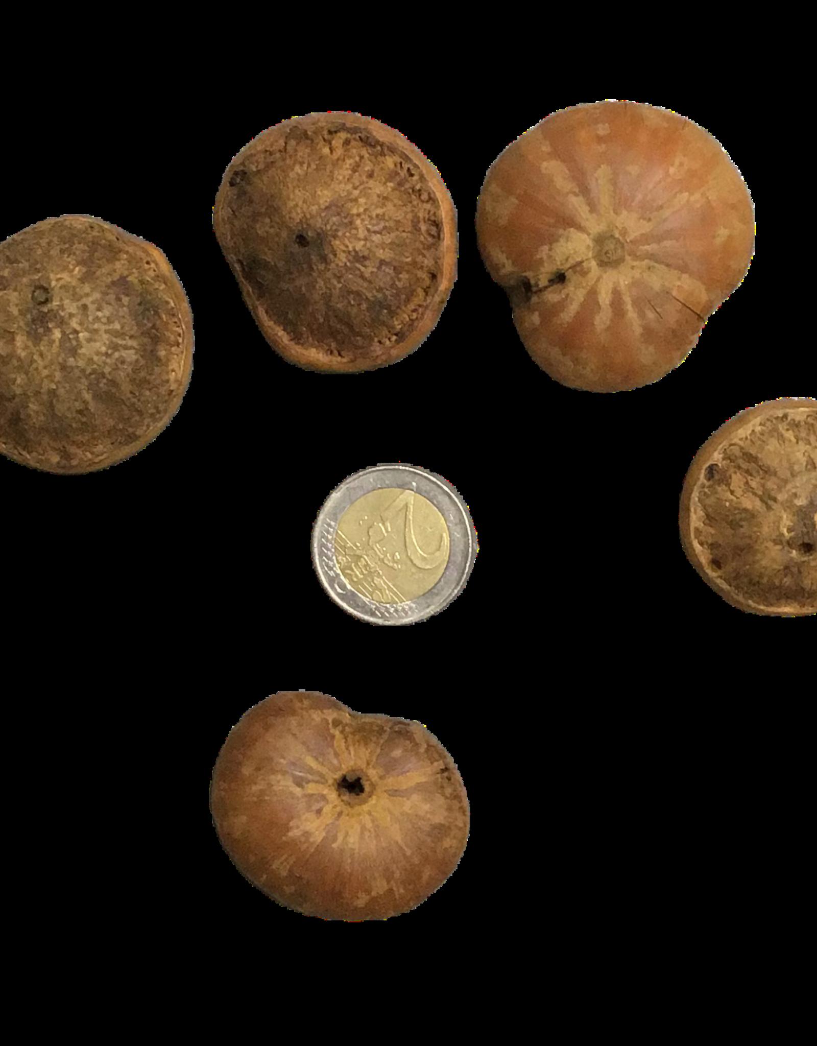 Produits naturels Cosses Popayo beans