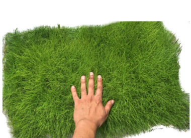 Tapijten en groene muren
