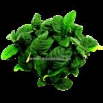 Epaqmat Coffeefolia - Groene muur