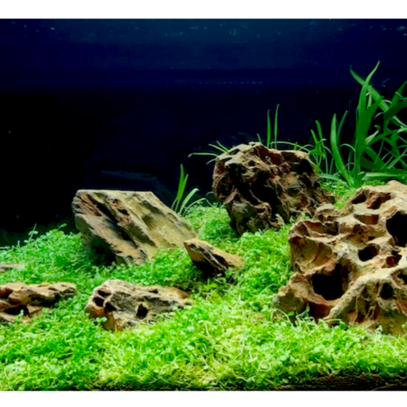Epaqmat Micranthemum Monte Carlo rug
