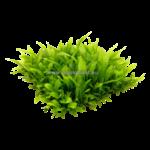 Epaqmat Microsorum pteropus mat
