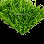 Epaqmat Microsorum Trident Mat