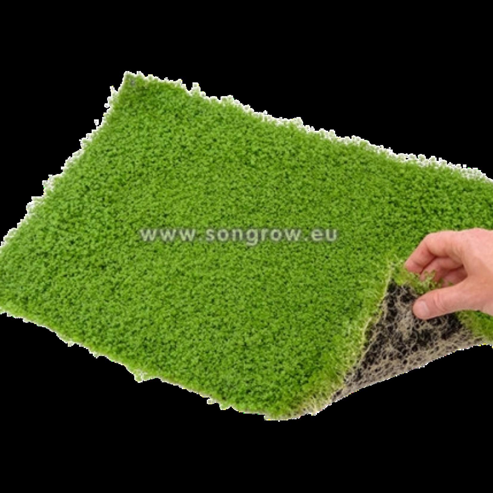 """Epaqmat Carpet Hemianthus callitrichoides """"Cuba"""""""