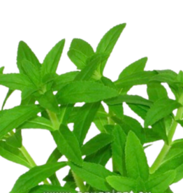 Bubba's Plants Eusteralis narrow leaf (Strip)