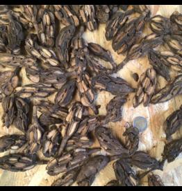 Produits naturels Magnolia (50gr)