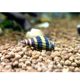 Bubba's Snail Assassin slakken