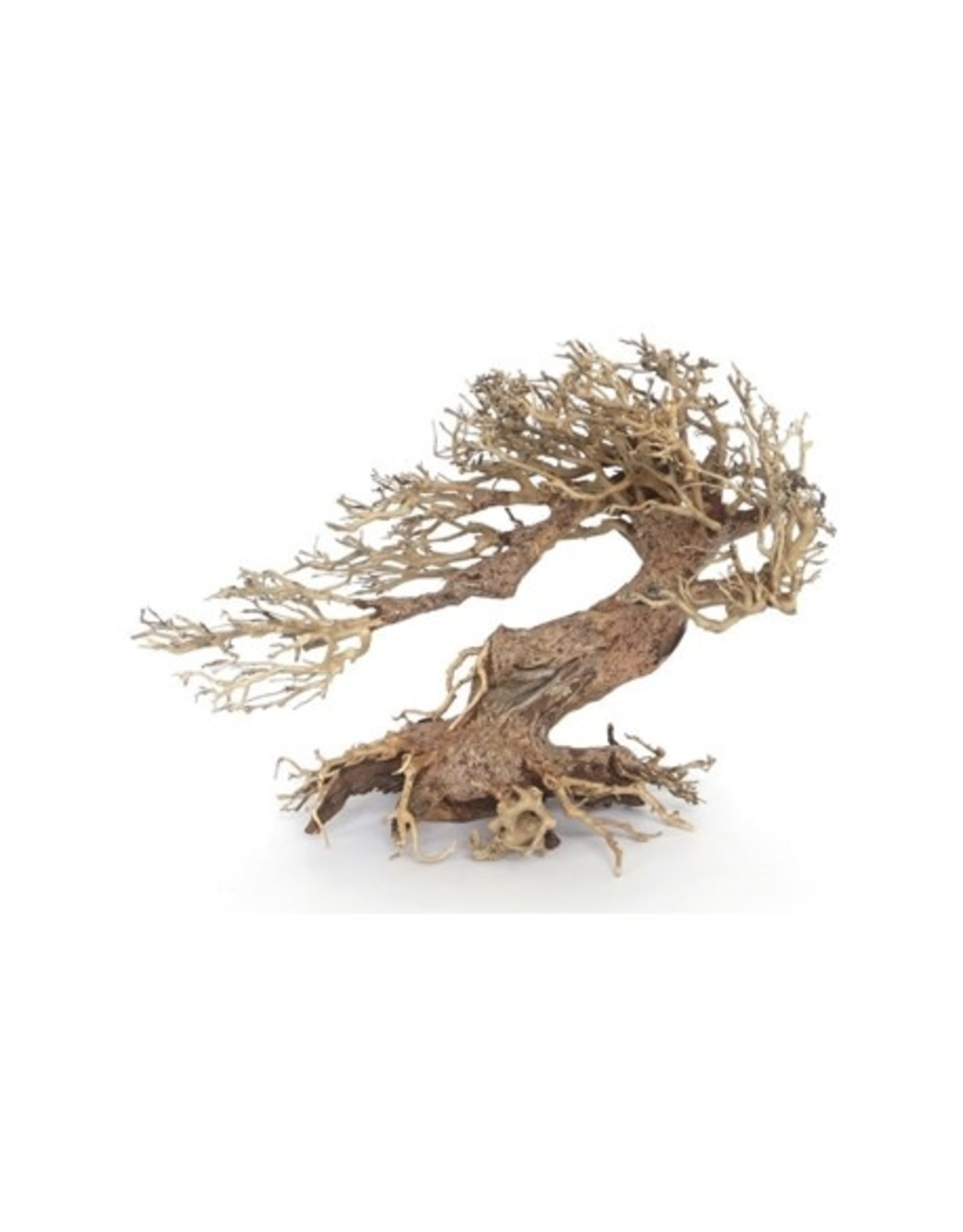 Bonsai - LEGNO ORIENTAL WIND 3 MD 30X13X23CM 1P