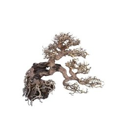 "Bonsai tree ""7 branches"" Medium"