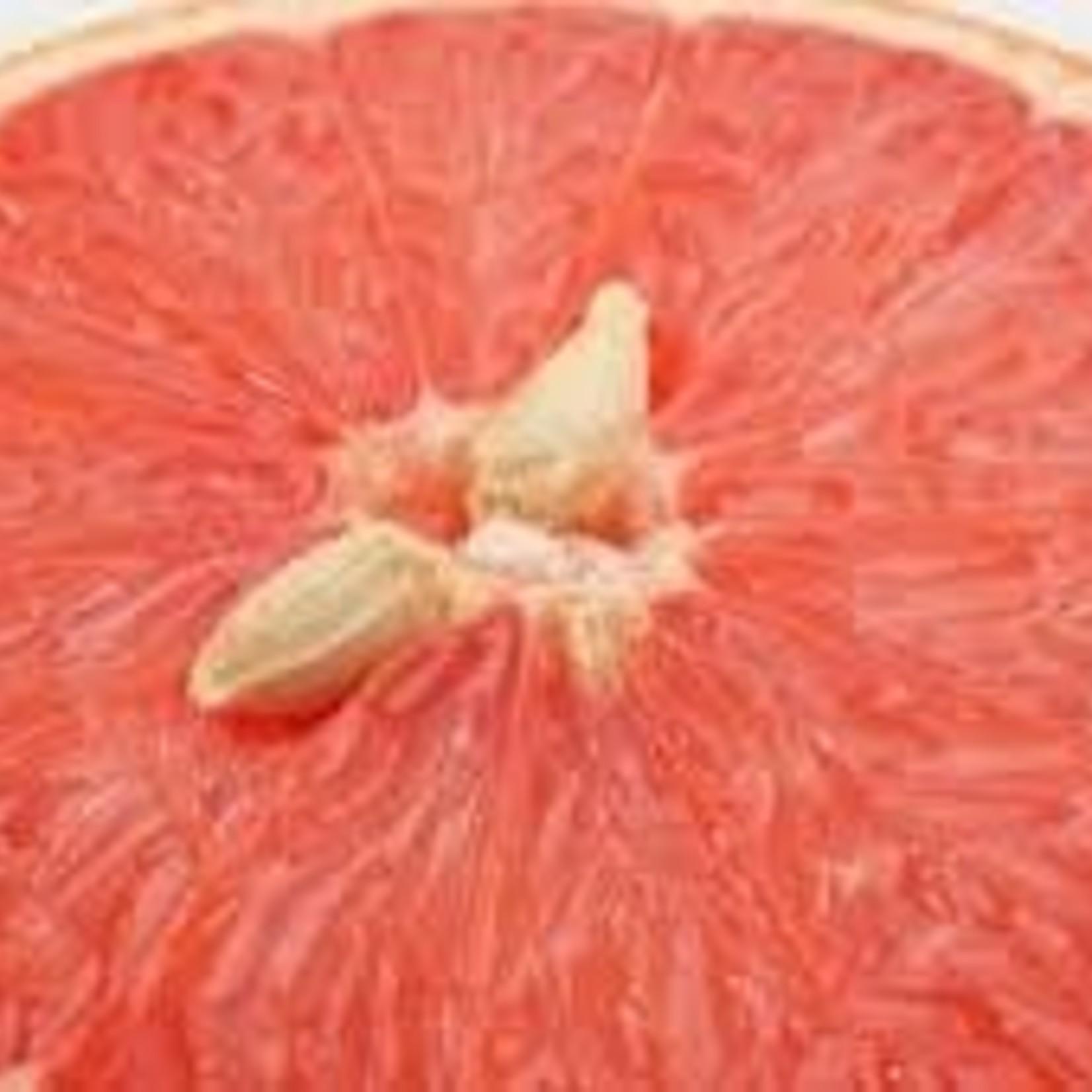 BioFishFood Grapefruit -zaadextract & Moringa