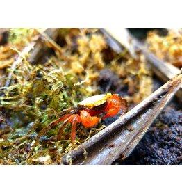 Bubba's Crabs Gouden Top