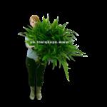 Bubba's Plants Microsorum pteropus XXXXL