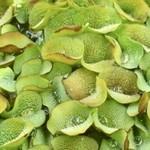 Bubba's Plants Salvinia natans
