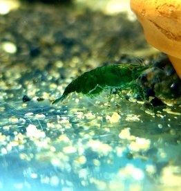 Bubba's Shrimps Green Jade